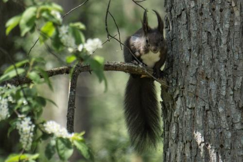 Eichhörnchen Nr. 2